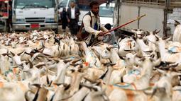 Lelaki Yaman berdiri di antara kawanan kambing di pasar ternak menjelang Idul Adha di ibu kota Sanaa, 6 Agustus 2019. Umat Islam di seluruh dunia akan merayakan Idul Adha yang identik dengan tradisi berkurban menggunakan hewan seperti kambing, domba, unta, sapi dan kerbau. (MOHAMMED HUWAIS/AFP)