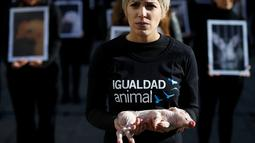 Seorang akivitis dari Igualdad Animal mebawa anak Babi saat melakukan aksi protes di di Madrid, Spanyol (10/12). Mereka memprotes anggapan hewan sebagai properti atau peliharaan saja yang bernilai lebih rendah dari manusia. (Reuters/Javier Barbancho)