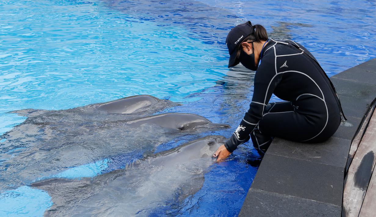 Seorang pelatih mengenakan masker saat melatih lumba-lumba selama penutupan sementara untuk umum karena kekhawatiran akan infeksi virus Covid-19 di sebuah pusat konservasi di Bali, Selasa (28/4/2020). (AP Photo/Firdia Lisnawati)