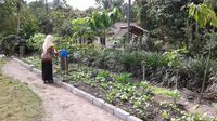 Desa Cokelat di Lereng Merapi (Switzy Sabandar/Liputan6.com)