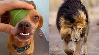 Tingkah laku hewan (Sumber: Brightside)