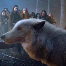 Direwolf Ghost - Game of Thrones Season 8 (Sumber: ew.com)