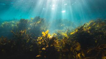 Top 3: Jasa Berang-Berang Laut Jadi Hewan yang Bantu Atasi Perubahan Iklim Disorot