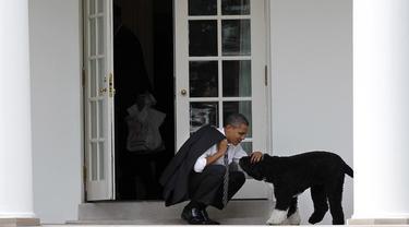 Dalam file foto 15 Maret 2012 ini, Presiden Barack Obama mengelus anjing keluarga bernama Bo, di luar Oval Office Gedung Putih di Washington. (AP Photo/Pablo Martinez Monsivais)