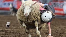 Seorang anak perempuan berpegangan saat domba berlari kencang selama mengikuti kompetisi Wool Riders Only Mutton Bustin 'di Iowa State Fair di Des Moines, Iowa, AS (12/9/2019). (Chip Somodevilla/Getty Images/AFP)