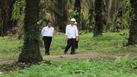 Presiden Joko Widodo didampingi Mentan Amran Sulaiman saat meninjau kebun kelapa sawit rakyat di Desa Panca Tunggal, Sungai Lilin, Kabupaten Musi Banyuasin, Sumatera Selatan, Jumat (13/10/2017). (Dok Gapki)