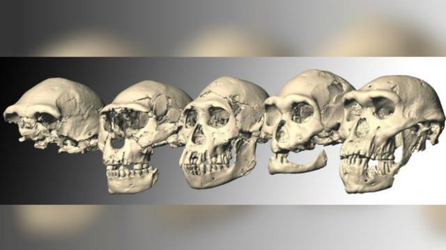 Penemuan Fosil Dmanisi Di Georgia Yang Ubah Sejarah Manusia Purba Global Liputan6 Com