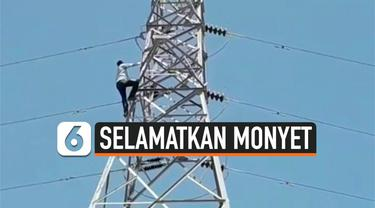 vertical monyet