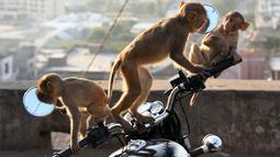 Kawanan monyet melihat bayangan diri mereka sendiri di kaca spion sepeda motor milik pengunjung kuil di Jaipur, negara bagian Rajasthan, India, 16 Desember 2016. (AFP PHOTO/DOMINIQUE Faget)