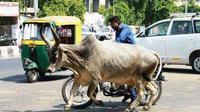 ternak berkeliaran di jalan raya