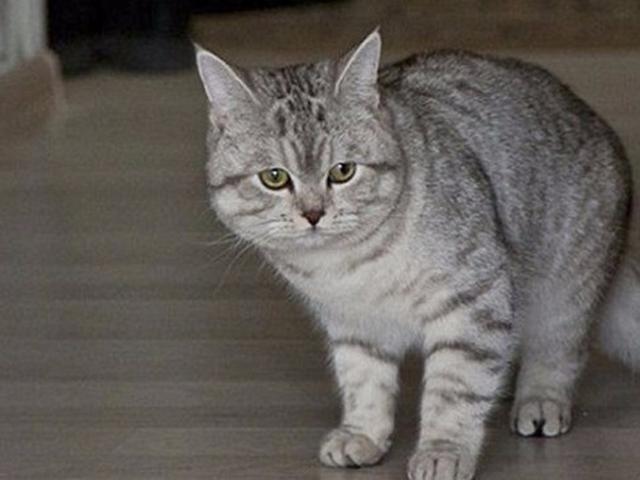 Dianggap Punya Ilmu Hitam Dukun Cantik Beli Kucing Ini Rp 1 M Citizen6 Liputan6 Com