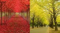 Potret 7 Pohon Ini Indah Sekali, Seperti Berada di Taman Impian (sumber: Brightside)