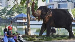 Warga menyapa gajah jelang festival Perahera di Kuil Gangaramaya, Sri Lanka (18/2). Sekitar 50 gajah dan ribuan penabuh genderang tradisional, penari, dan biksu akan berpartisipasi dalam prosesi Navam Budha. (AFP Photo/Ishara S. Kodikara)
