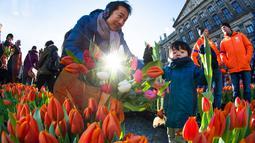 Seorang pria dan putranya memetik tulip pada Hari Bunga Tulip Nasional di Dam Square, Amsterdam pada 19 Januari 2019. Pengunjung bisa memetik bunga tulip yang terhampar seluas 2.500 meter persegi secara cuma-cuma. (AP/Peter Dejong)