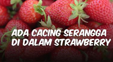 thumbnail cek fakta strawberry