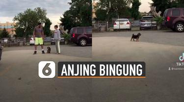 Ada-ada saja yang dilakukan pemilik anjing peliharaan ini ketika mengerjai anjingnya.