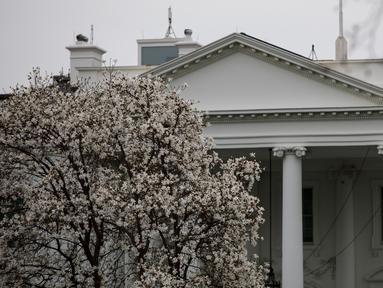 Foto yang diabadikan pada 11 Maret 2020 ini menunjukkan Gedung Putih di Washington DC, Amerika Serikat. Sejumlah bangunan ikonis (landmark) di Washington DC, termasuk Gedung Putih, terpaksa ditutup sementara untuk umum akibat wabah COVID-19 yang tengah merebak di negara itu. (Xinhua/Ting Shen)