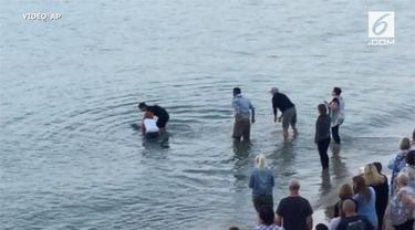 Seekor ikan lumba-lumba terdampar di bibir Pantai Weymouth. Lumba-lumba ini ditemukan warga Dorset dalam kondisi hidup.