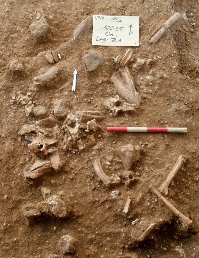 Situs penggalian tempat penemuan sisa-sisa tulang dari jenis manusia purba yang tidak dikenal di dekat kota Ramla yang dirilis pada 24 Juni 2021. Peneliti berpikir manusia purba itu merupakan keturunan spesies awal yang menyebar ke wilayah tersebut ratusan ribu tahun lalu. (TEL AVIV UNIVERSITY/AFP)