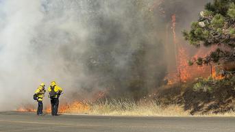 Kebakaran Hutan di California Ancam Habitat Spesies Pohon Terbesar di Dunia