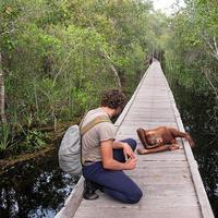 Taman Nasional Tanjung Puting. (Flick River)