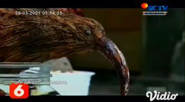 Buah kelapa kering yang biasanya dibuang percuma, ternyata bisa dimanfaatkan sebagai tanaman bonsai yang indah. Di tangan Junaedi, warga Desa Karangrejo, Jember, Jawa Timur, bonsai kelapa bisa dibentuk sedemikian rupa.
