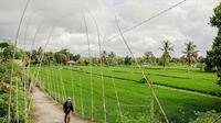 Persawahan di Desa Bilebante, Lombok Tengah, Nusa Tenggara Barat (NTB). (dok. Biro Komunikasi Kementerian Pariwisata dan Ekonomi Kreatif)