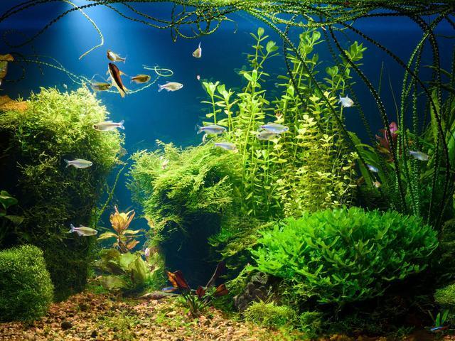 Setelah Ikan Cupang Kini Giliran Aquascape Yang Naik Daun Hot Liputan6 Com