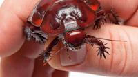Fobia Kecoa, Begini Mengatasinya. Foto : Natural History Museum