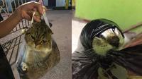 Potret Kucing di Dalam Plastik (Sumber: Twitter/redpanda1303)