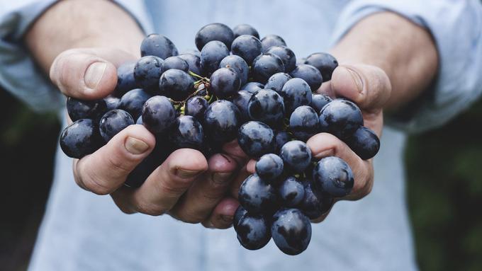 Ini Alasan Ibu Hamil Sebaiknya Tidak Makan Buah Anggur