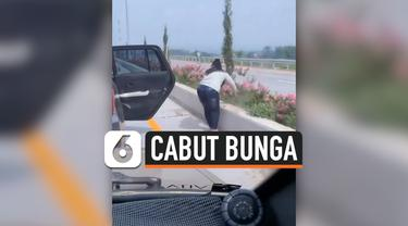 THUMBNAIL CABUT BUNGA