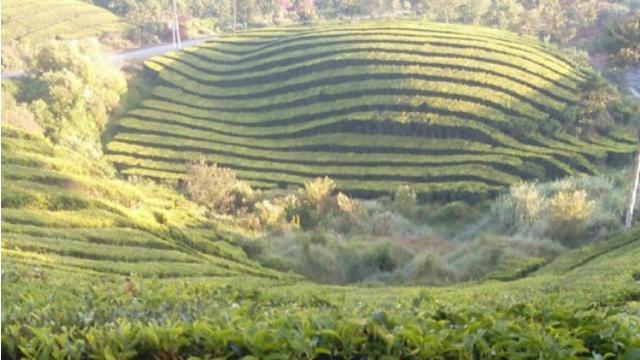 5 Wisata Alam Di Ngawi Sajikan Panorama Alam Indah