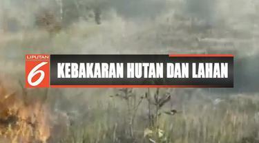 Puluhan hektare kebun tebu di Konawe Selatan, Sulawesi Tenggara, terbakar diduga sengaja dilakukan oknum.