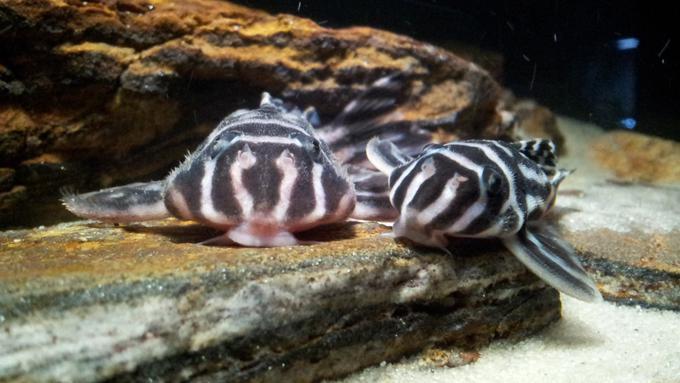 71 Koleksi Gambar Hewan Peliharaan Ikan Terbaru