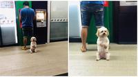 Potret Anjing Jagain Sang Pemilik Saat di ATM (sumber:Twitter/@dewahoya)