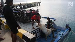 Warga menurunkan seekor kambing dari kapal ketika tiba di pelabuhan Pulau Sebesi, Lampung, Senin(31/12). Dari Sebesi ke Dermaga Canti, hanya ada satu kapal yang menyeberang pada pukul 07.00 WIB bertarif Rp 20.000 per orang. (Liputan6.com/Herman Zakharia)