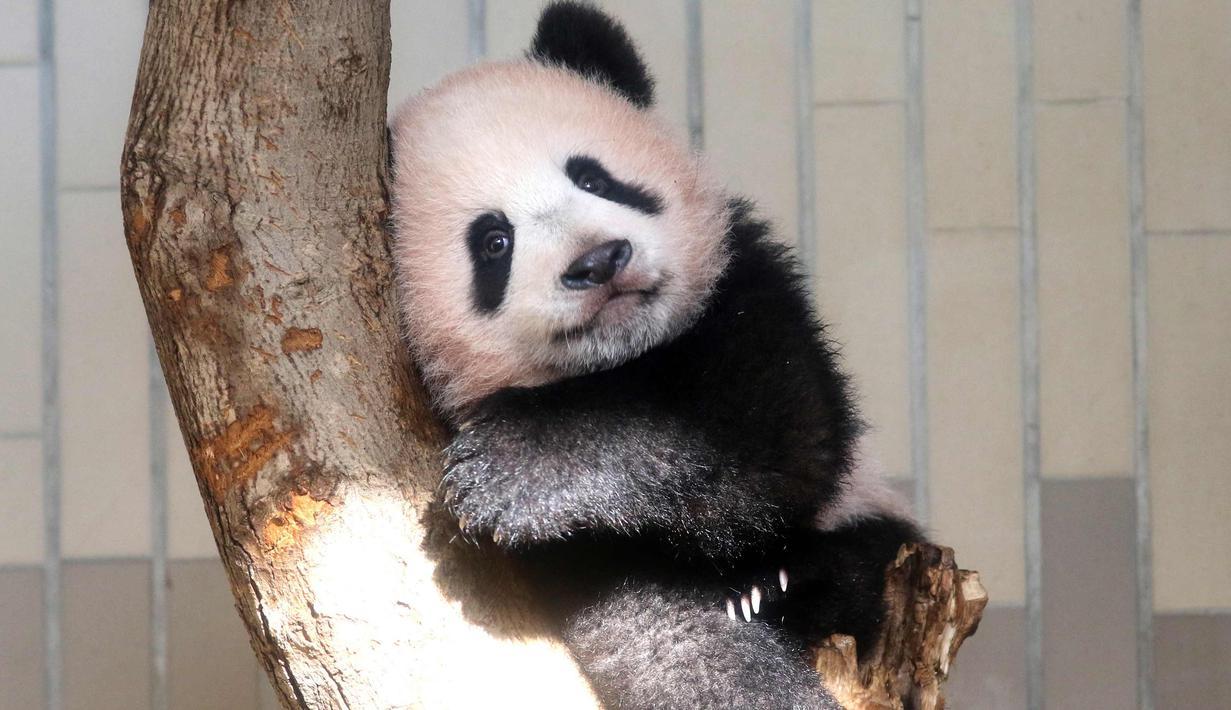 Koleksi Gambar Binatang Lucu Bayi Binatang Yang