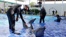 Para pelatih memberikan pelatihan kepada lumba-lumba selama penutupan sementara di sebuah pusat konservasi di Bali, Selasa (28/4/2020). Semua tempat wisata dan situs telah diminta untuk sementara waktu ditutup sebagai langkah untuk mengendalikan penyebaran Covid-19. (AP Photo/Firdia Lisnawati)