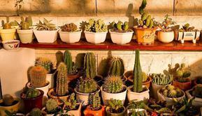 Gemar Pelihara Tanaman Hias? Berikut 6 Rekomendasi Tempat Jual Pot Tanaman Unik (dok. Instagram @cactusgarden_id/ Brigitta)