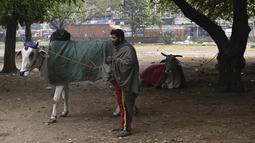 Seorang pria berdiri di dekat seekor sapi yang ditutupi selimut di dalam sebuah taman di New Delhi, India, Selasa (5/1/2021). Hal tersebut untuk melindungi sapi agar tetap hangat selama bulan-bulan musim dingin. (Photo by Sajjad HUSSAIN / AFP)
