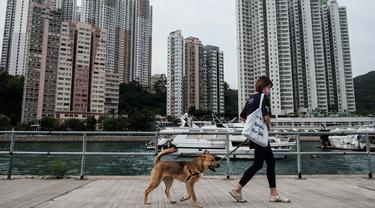 """Asisten manajer Tai Po Homing Center Eva Sit berjalan dengan """"Sidney"""" di dekat Hong Kong Dog Rescue (HKDR) di Hong Kong, 14 April 2020. Sejak pandemi corona Covid-19, kelompok kesejahteraan hewan HKDR berusaha berjuang lantaran semua acara penggalangan dana dibatalkan. (Anthony WALLACE/AFP)"""