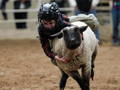 """Seorang anak saat menunggangi seekor domba selama acara """"Mutton Bustin '"""" di National Western Stock Show di Denver, Colorado, (16/1). Anak-anak yang memegang paling lama menerima banyak poin. (AFP/Photo/Rick T. Wilking)"""