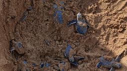 Sejumlah tukik penyu hijau merayap keluar dari sarang mereka menuju arah laut di sebuah pantai Pulau Manda, Kenya, 18 Juni 2019. (TONY KARUMBA/AFP)