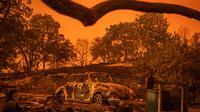 Mobil Volkswagen Beetle hangus oleh api yang melahap sebuah tempat tinggal pada kebakaran hutan yang dijuluki Carr Fire di Redding, California, Jumat (28/7). Kebakaran yang melanda selama musim panas ini sudah melahap 1.900 hektar lahan. (AP/Noah Berger)