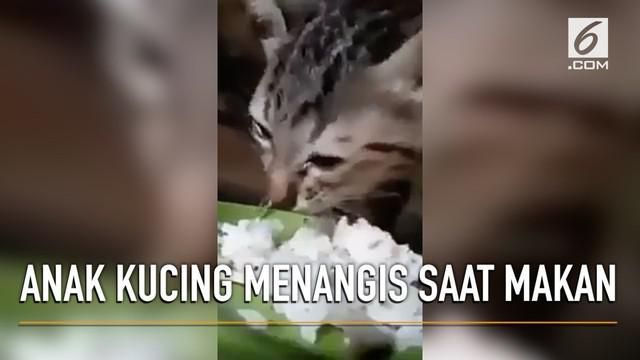 Berita anak kucing Hari Ini - Kabar Terbaru Terkini