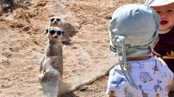 Anak-anak menonton meerkat di kandang mereka di Kebun Binatang Taronga di Sydney (18/10/2021). Kebun binatang Taronga membuka kembali pintunya bagi pengunjung yang divaksinasi setelah pencabutan pembatasan penguncian Sydney. (AFP/Saeed Khan)