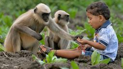 Dalam foto yang diambil 8 Desember 2017, Samarth Bangari (2) memberi makan kumpulan monyet di sebuah ladang dekat rumahnya di Allapur, India. Uniknya, kelompok monyet itu setiap hari datang ke rumah Bangari yang berada di tepi hutan. (Manjunath KIRAN/AFP)