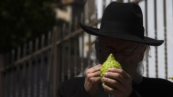 FOTO: Etrog, Buah Suci untuk Ritual Warga Yahudi