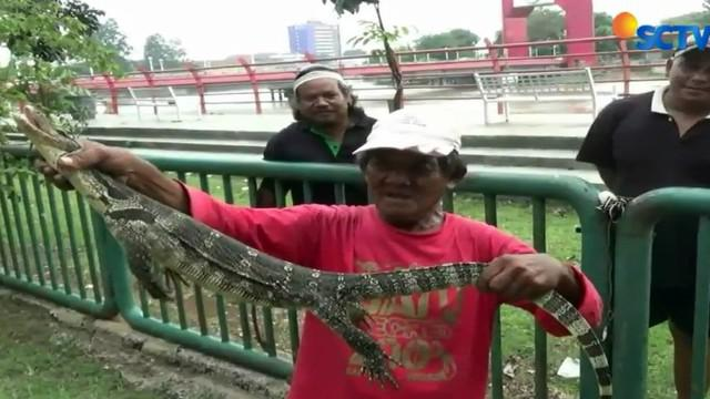 Seekor biawak berukuran besar meronta mencoba melepaskan diri usai ditangkap warga di pinggir Sungai Cisadane.